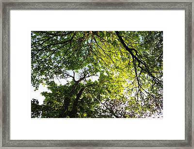 Daydreaming In The Hammock Framed Print