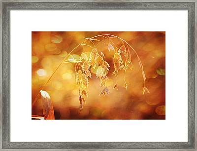Daydreams In The Meadow Framed Print