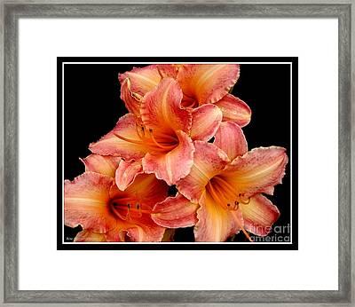 Daylilies 2 Framed Print by Rose Santuci-Sofranko