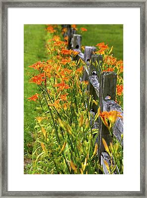 Daylilies Along Fence Framed Print
