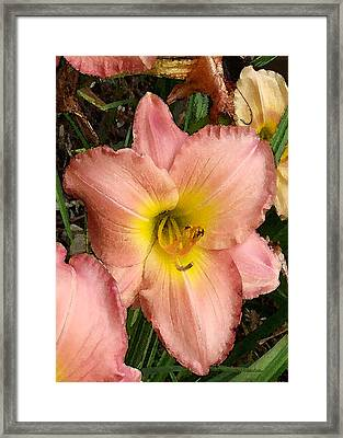 Framed Print featuring the photograph Daylilies by Jayne Wilson
