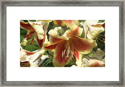 Oriential Lilys...   # Framed Print by Rob Luzier