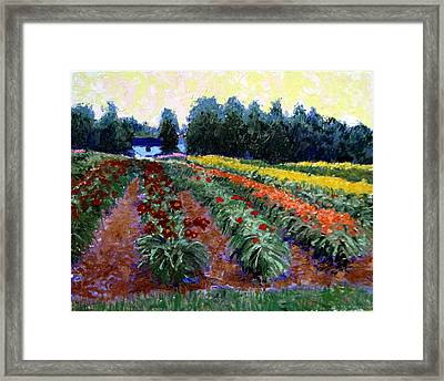 Daylily Delight Framed Print by David Zimmerman