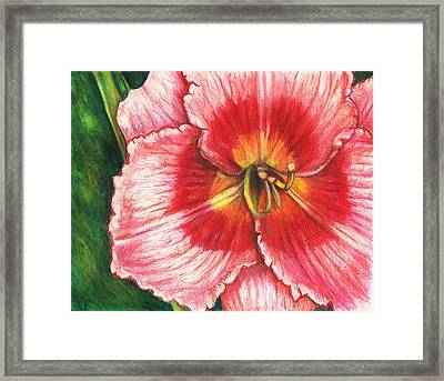 Daylily Delight Framed Print