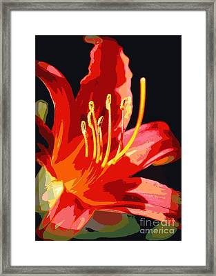 Daylily Flame Framed Print by Carol Groenen