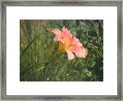Framed Print featuring the photograph Daylily In The Sun by Jayne Wilson