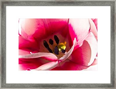 Framed Print featuring the photograph Daylily by Joel Loftus
