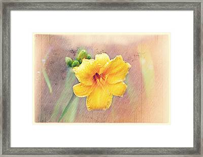 Daylily  Showers Framed Print by Mary Timman
