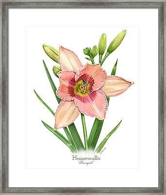 Daylily Svengali  Framed Print by Artellus Artworks