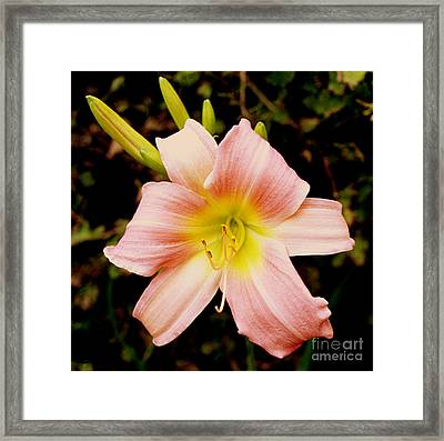 Framed Print featuring the photograph Daylily by Tom Brickhouse