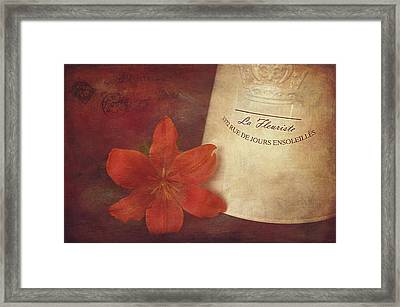 Daylily Vintage Postcard Framed Print by Maria Angelica Maira