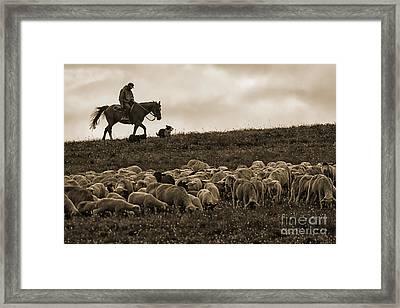Days End Sheep Herding Framed Print