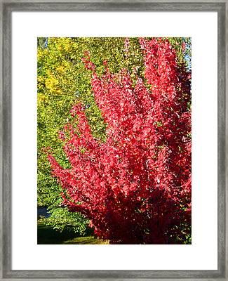 Days Like This Framed Print by Kathy Bassett