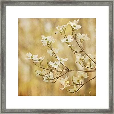 Days Of Dogwoods Framed Print