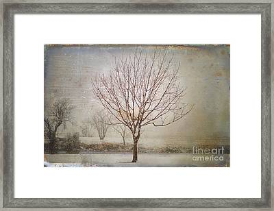 Days Of Old Framed Print by Betty LaRue