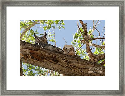 Daytime Roost Framed Print by Lula Adams