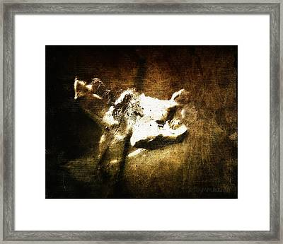 Dazed And Confused Framed Print by Mimulux patricia no No