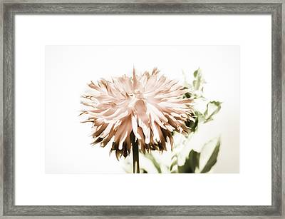 Framed Print featuring the photograph Dazzling Dahlia by Sherri Meyer