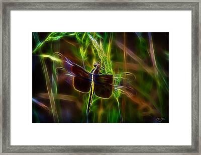 Dazzling Dragonfly Framed Print by Barry Jones
