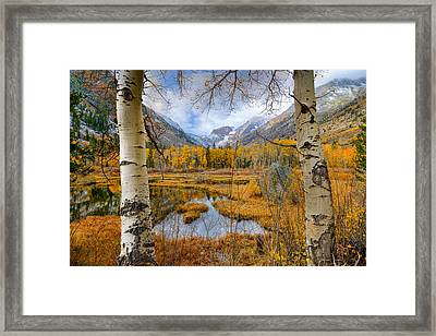 Dazzling Fall Foliage Framed Print