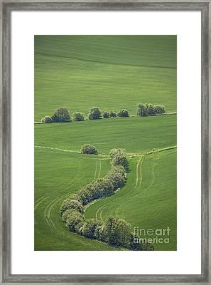 Dazzling Green Framed Print by Evelina Kremsdorf