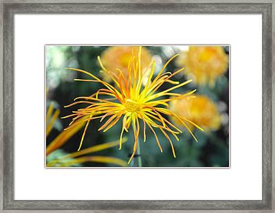 Dazzling Mum Framed Print by Sonali Gangane