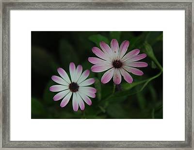 Framed Print featuring the photograph Dbg 041012-0110 by Tam Ryan
