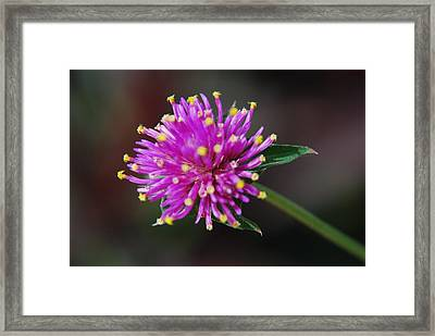 Framed Print featuring the photograph Dbg 050812-1779 by Tam Ryan