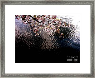 Dc Cherry And Black Framed Print by Jacqueline M Lewis
