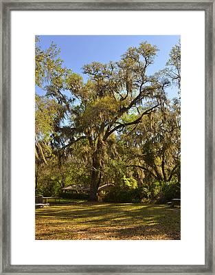 De Leon Springs - Classic Old Florida Framed Print by Christine Till