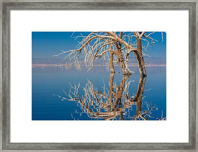 Dead Arch Framed Print by Scott Campbell