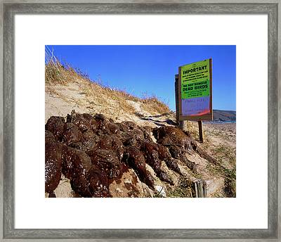Dead Birds Killed By An Oil Spill At Sea. Framed Print by Simon Fraser/science Photo Library