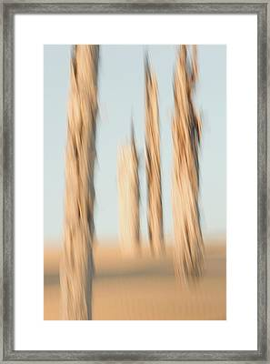 Dead Conifer Trees In Sand Dunes Framed Print by Phil Schermeister