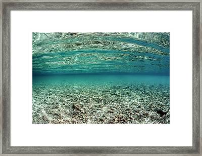 Dead Coral Reef Framed Print by Ethan Daniels