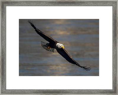 Dead Eye Framed Print by Glenn Lawrence