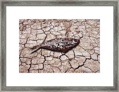 Dead Fish On Cracked Earth Framed Print by Victor De Schwanberg