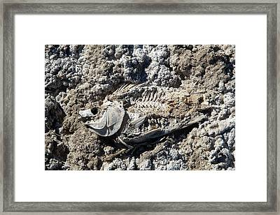 Dead Fish On Salt Flat Framed Print