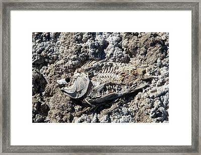 Dead Fish On Salt Flat Framed Print