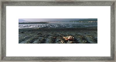 Dead Flamingo At The Lakeside, Lake Framed Print by Panoramic Images