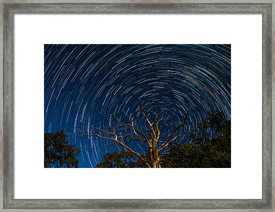 Dead Oak With Star Trails Framed Print