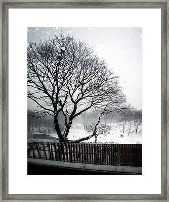 Dead Of Winter Framed Print by Lilliana Mendez