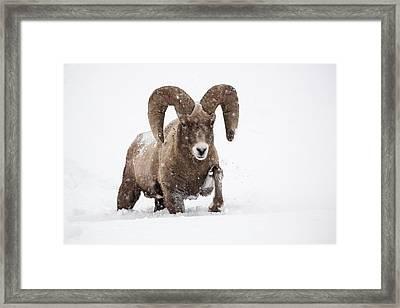 Dead Of Winter Framed Print by Sandy Sisti