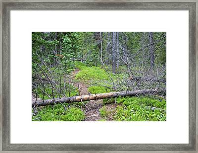 Dead Pine Trees Blocking A Hiking Trail Framed Print by Jim West