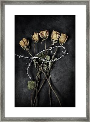 Dead Roses Framed Print by Joana Kruse