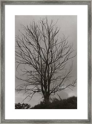 Framed Print featuring the photograph Dead Tree by Amarildo Correa