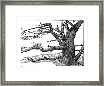 Dead Tree Framed Print by Daniel Reed