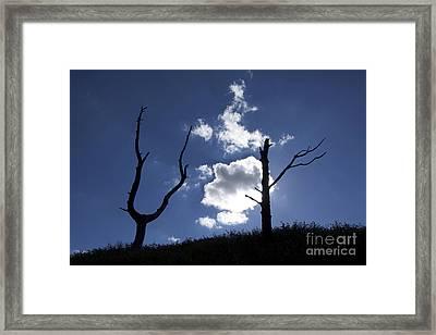 Dead Tree In Backlighting Framed Print