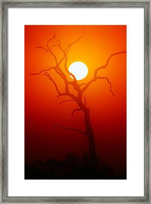 Dead Tree Silhouette And Glowing Sun Framed Print by Johan Swanepoel