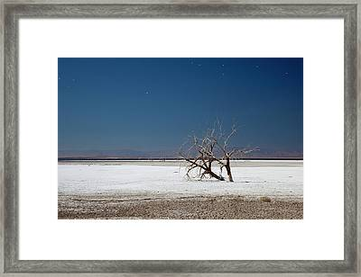 Dead Trees On Salt Flat Framed Print