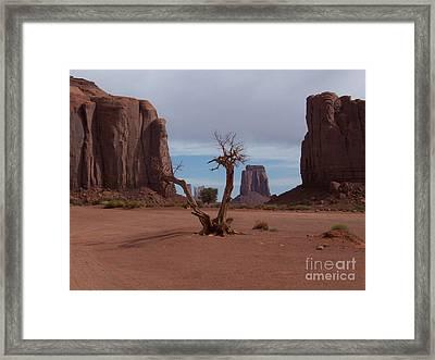 Dead-wood Framed Print by Luke Moore